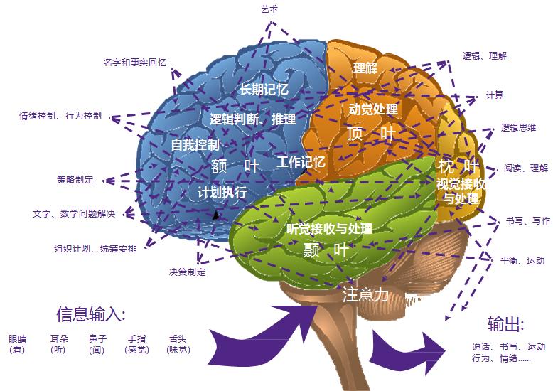 大脑是可以训练的