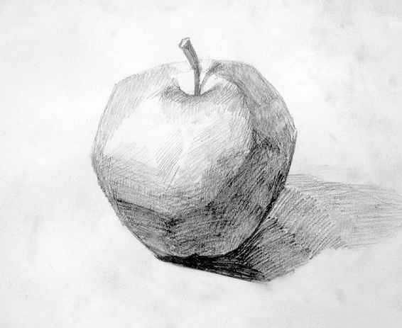 准确的**绘画表现出单个静物      学生可熟练起形,构图,铺黑白灰大