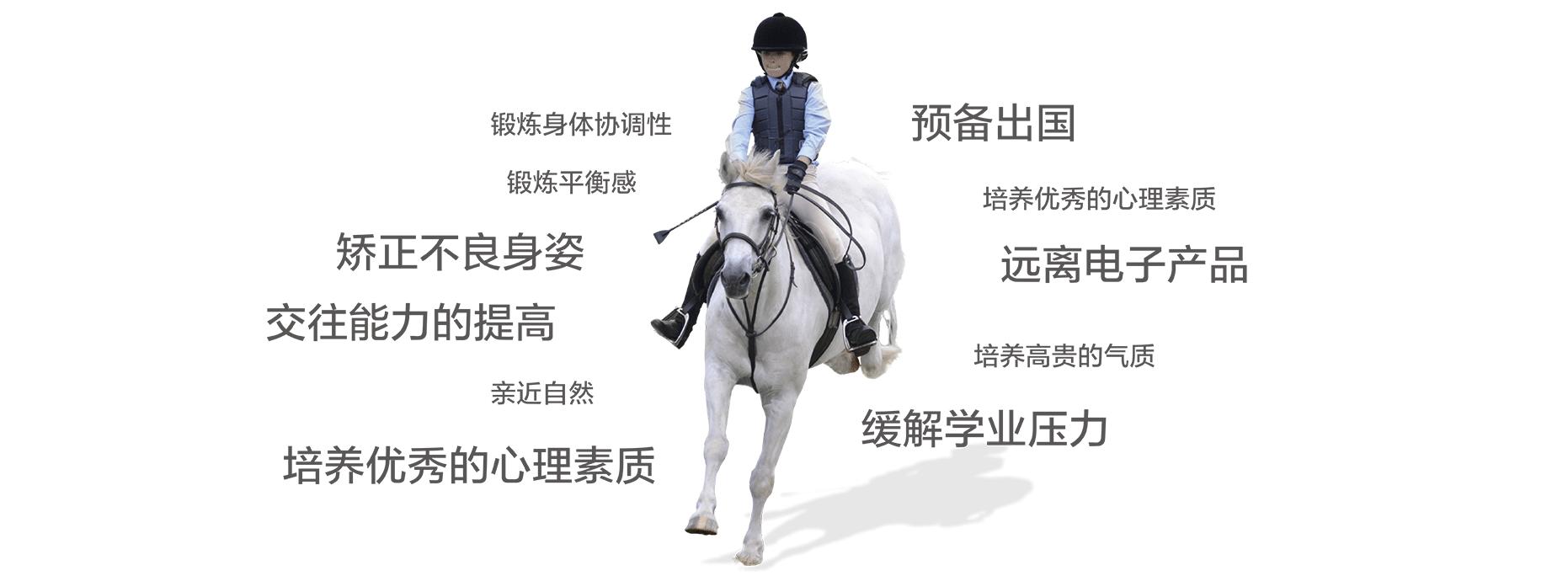深圳马术培训
